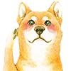 犬aH1100.jpg